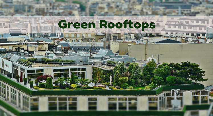 Green Rooftops